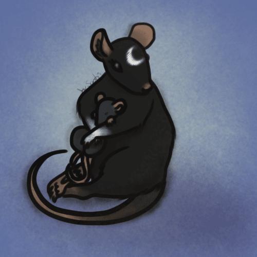 Pour une journée que je voulais plein de câlin, une maman rat et son bébé raton
