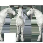 Template Shire 2 (Téléchargement Sims 3)