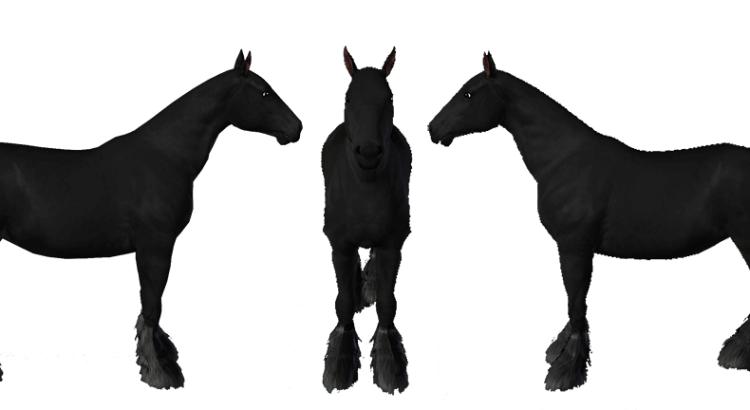 Template de cheval de trait Shire pour le jeu Sims 3 par Scotis