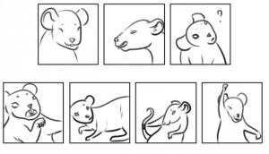 Dessin et expression de rats