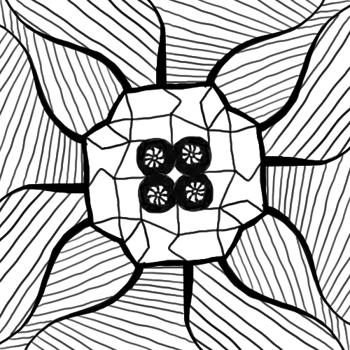 Mandala de Scotis