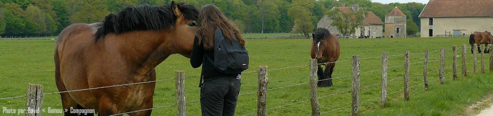 Scotis, Charlotte Leclère avec un cheval ardennais