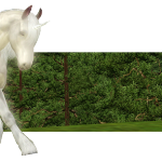 Foire Aux Questions Sims 3 – Chevaux et écuries