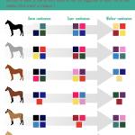 Choisir la couleur de l'équipement de son cheval