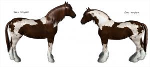 Template de gypsy cob (aussi appelé Irish cob ou Tinker), comparaison