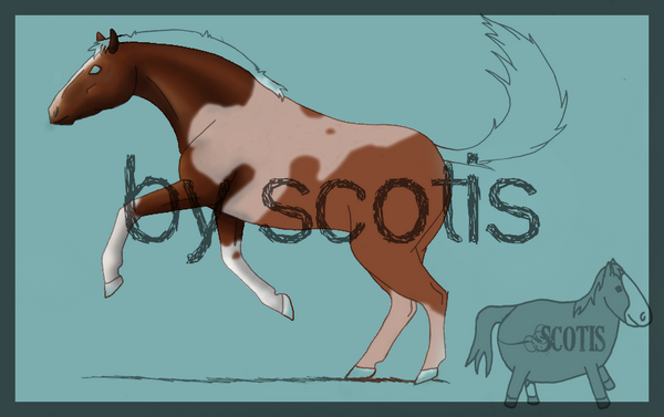 Cheval pie en cours par Scotis