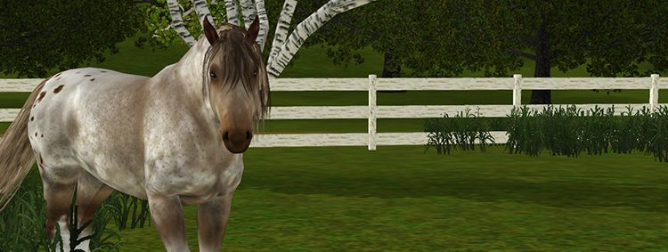 Screenshot jument irish cob Sims 3