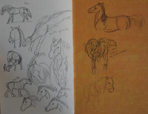 Croquis de chevaux par Scotis