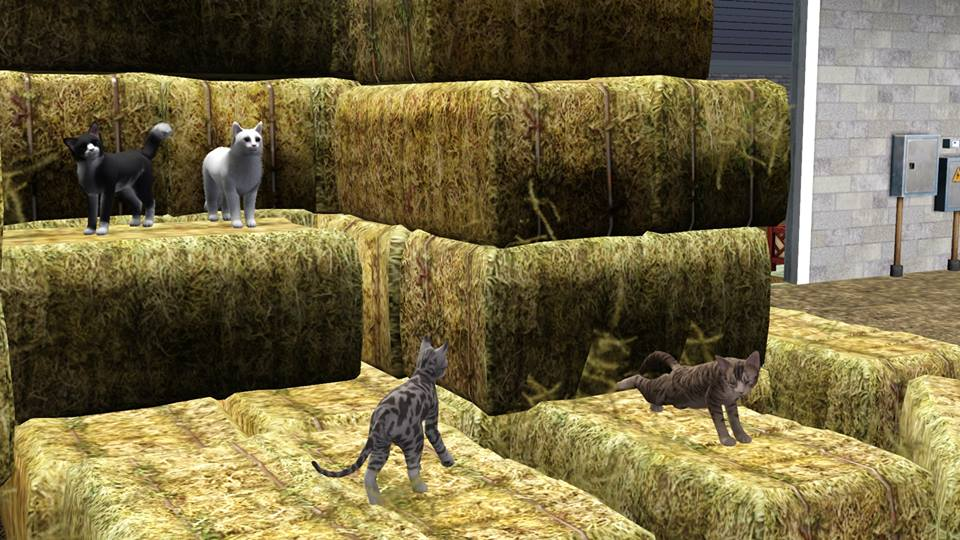 Screenshots Sims 3 : les chats de l'écurie éthérée