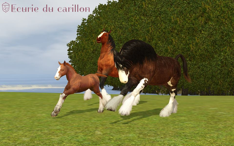 Screenshots Sims 3 : troupeau de chevaux shire