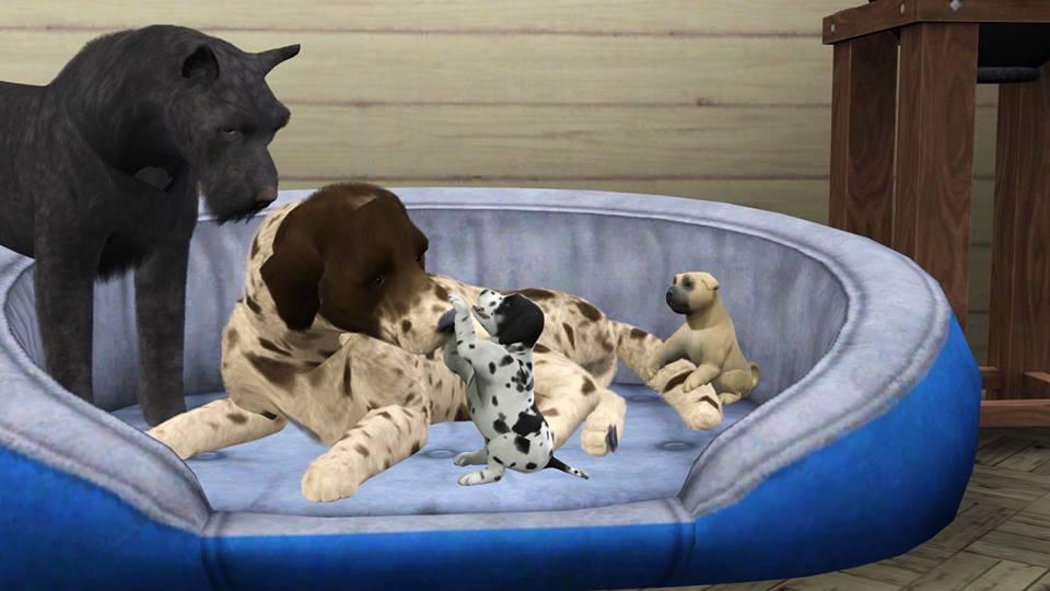 Screenshots Sims 3 : naissance de chiots