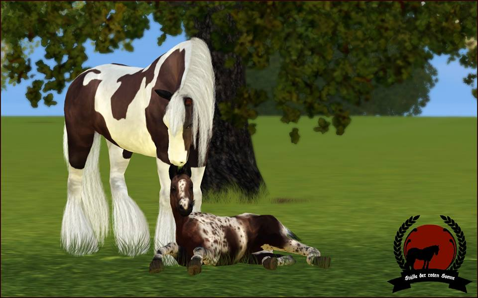 Screenshots Sims 3 : naissance poulain irish cobs