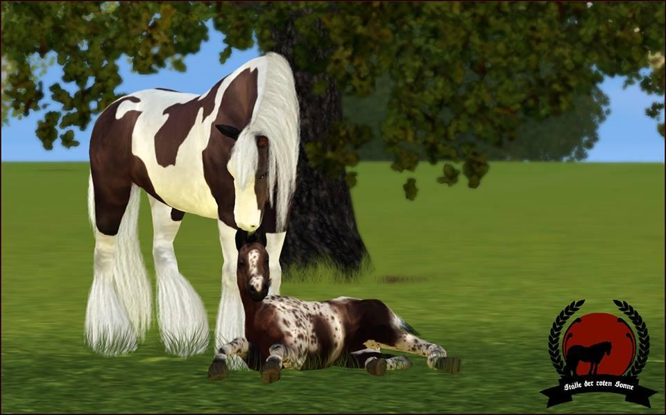 Screenshots Sims 3 : naissance poulain irish cobs
