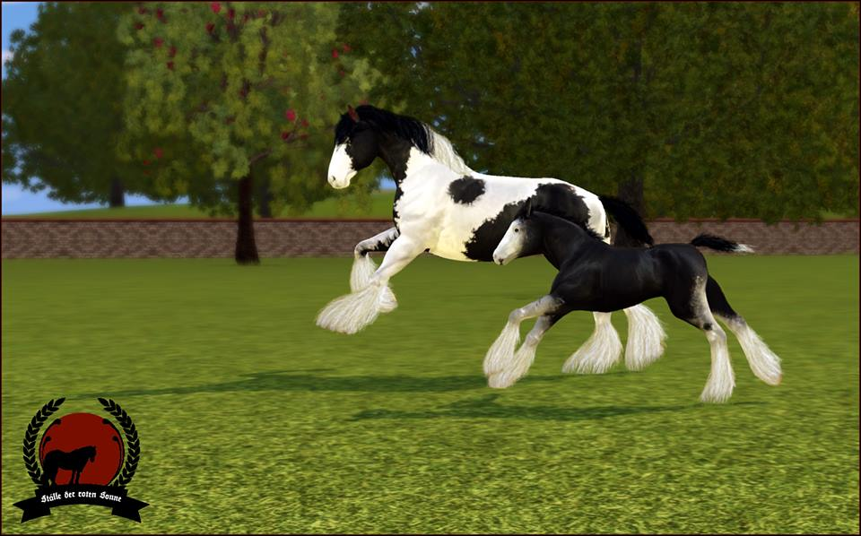 Screenshots Sims 3 : irish cob au galop