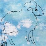 Scotis a le mouton