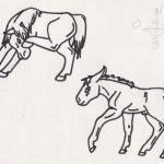 Cheval et ânons