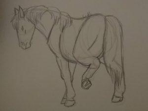Croquis d'un cheval vu de 3/4 arrière