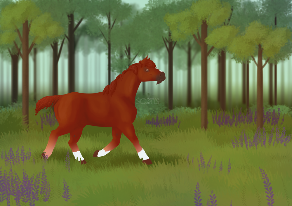 Illustration par Scotis (Charlotte Leclère) d'un étalon alezan dans une plaine fleurie en bordure de forêt