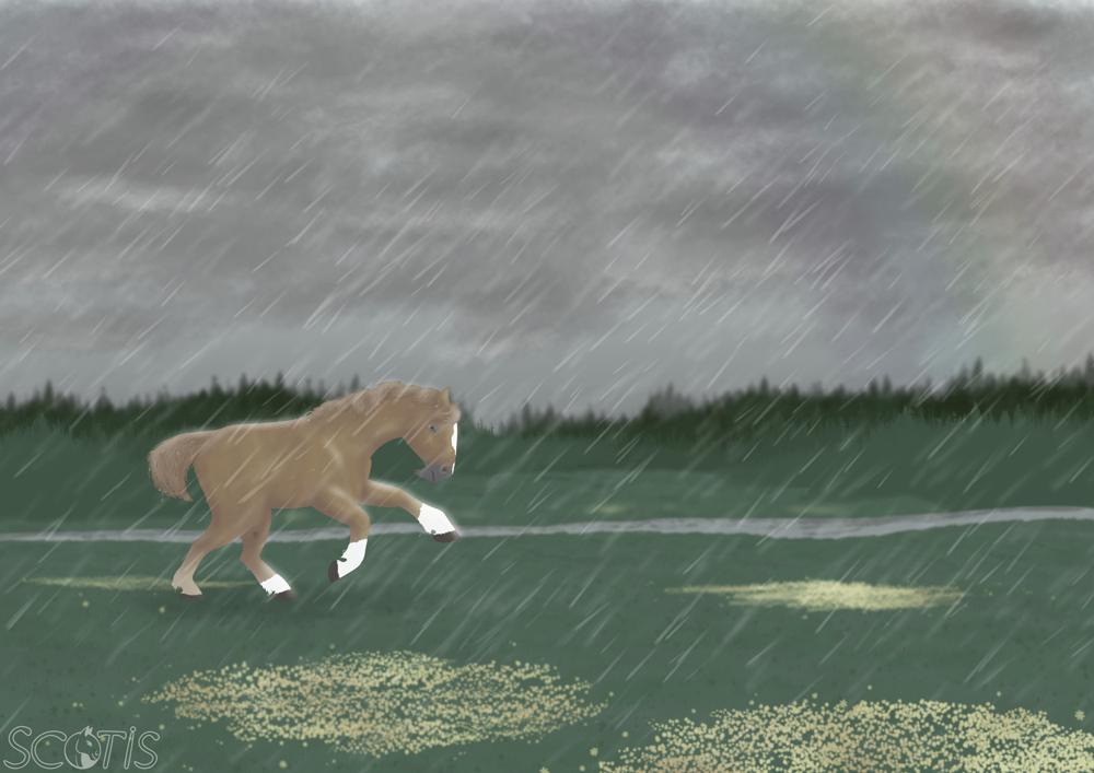 Sodas, étalon alezan courant sous la pluie dans une plaine verdoyante et fleuris