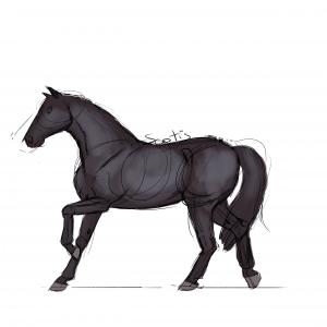 Cheval de selle noir au trot, croquis par Scotis