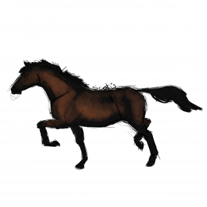 Cheval de selle bai au trot, sketch par Scotis