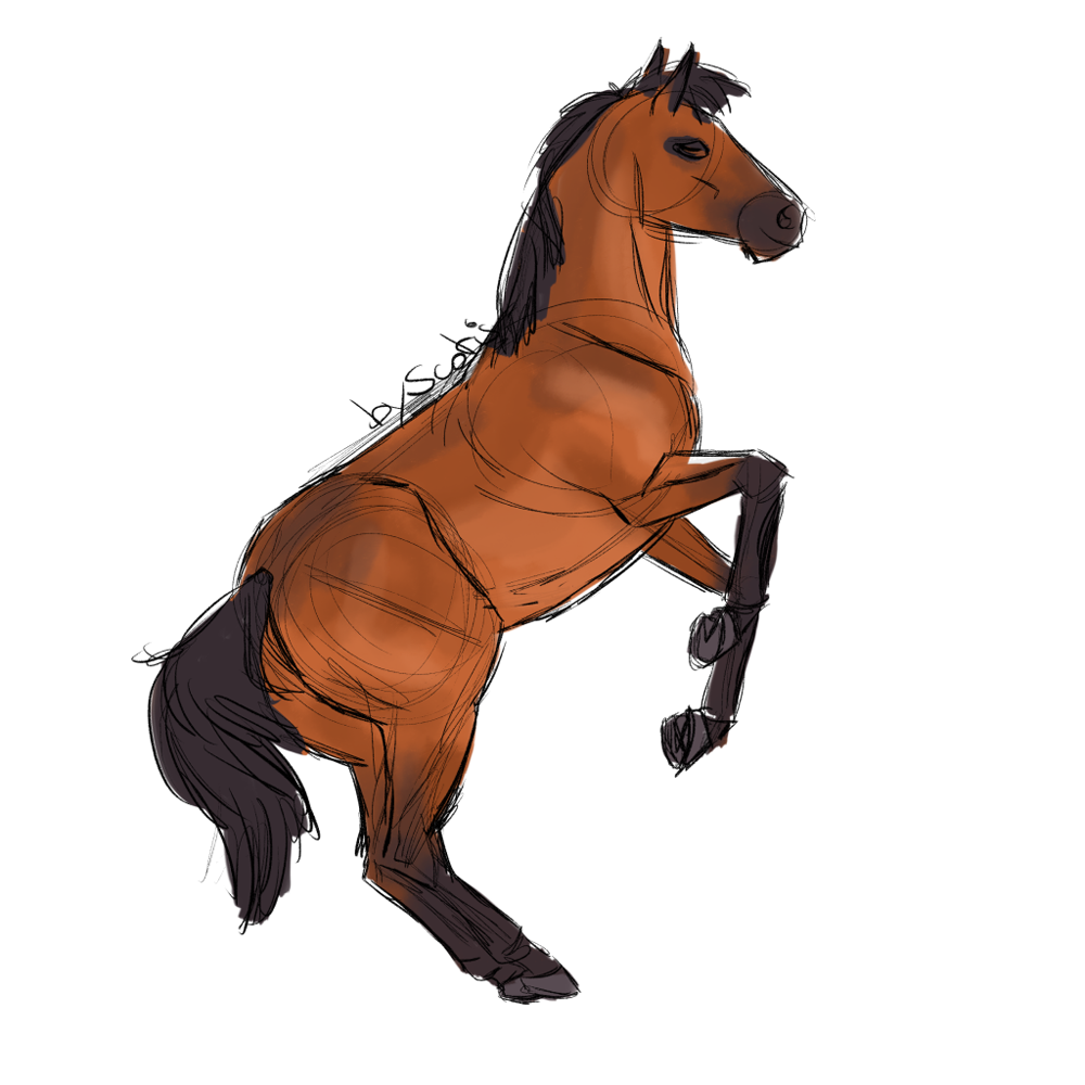 Cheval de selle bai ruant, sketch par Scotis