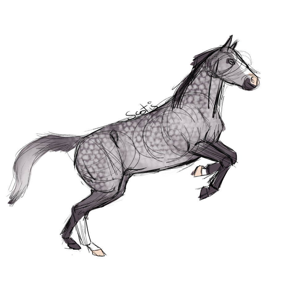 Cheval de selle gris cabrant, sketch par Scotis