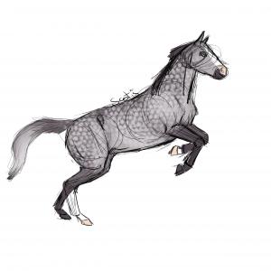 Cheval de selle gris cabrant, sketch par Scotis