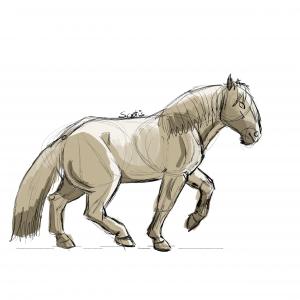 Cheval de trait gris au trot, croquis par Scotis