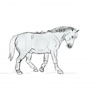 Cheval de trait gris au pas, croquis par Scotis