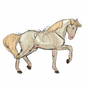 Cheval de selle perlino réalisant un passage, sketch par Scotis
