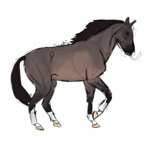 Cheval de selle bai dun, sketch par Scotis