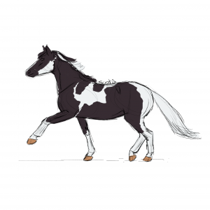 Cheval de selle pie-noire au trot, sketch par Scotis