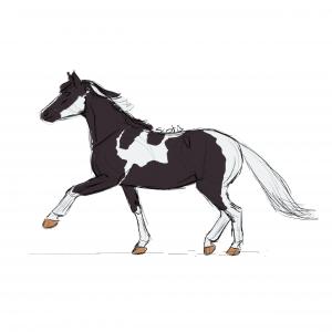 Cheval de selle pie-noire au trot, sketch par Scotis