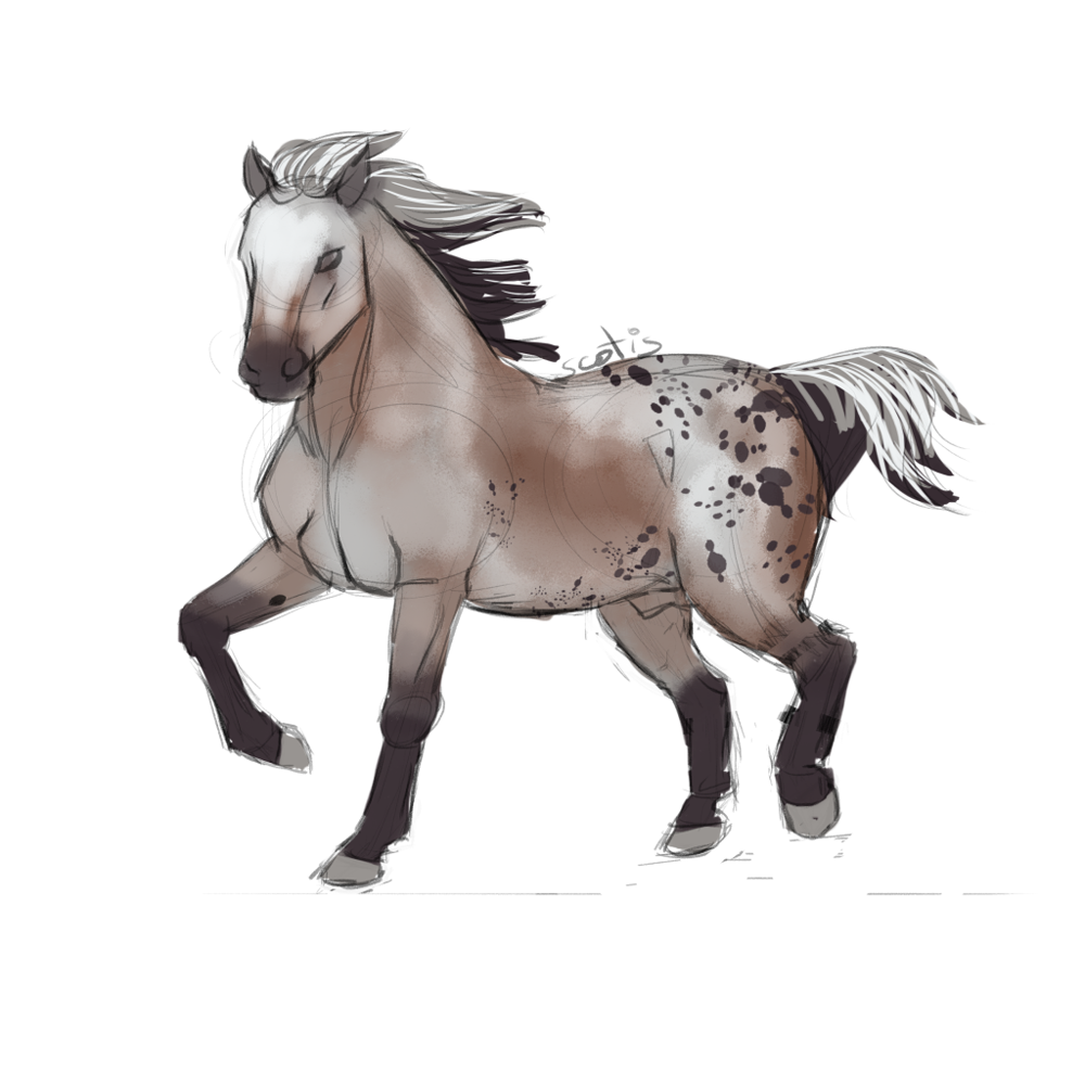 Cheval de selle appaloosa varnish bai trottant, sketch par Scotis