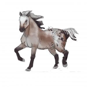 Cheval de selle appaloosa varnish bai trottant, sketch par Scotis
