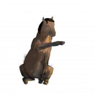 Cheval de selle bai assis faisant une jambette, sketch par Scotis