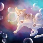 Chat-mallo dans les bulles