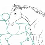 Comment dessiner facilement un cheval (avec une anatomie correcte)