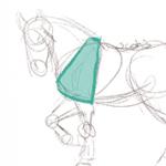 Dessiner le corps d'un cheval