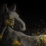En noir et or