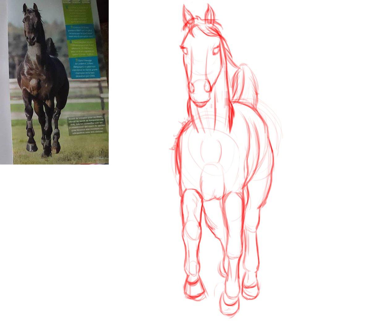 Dessin d'un cheval vu de face